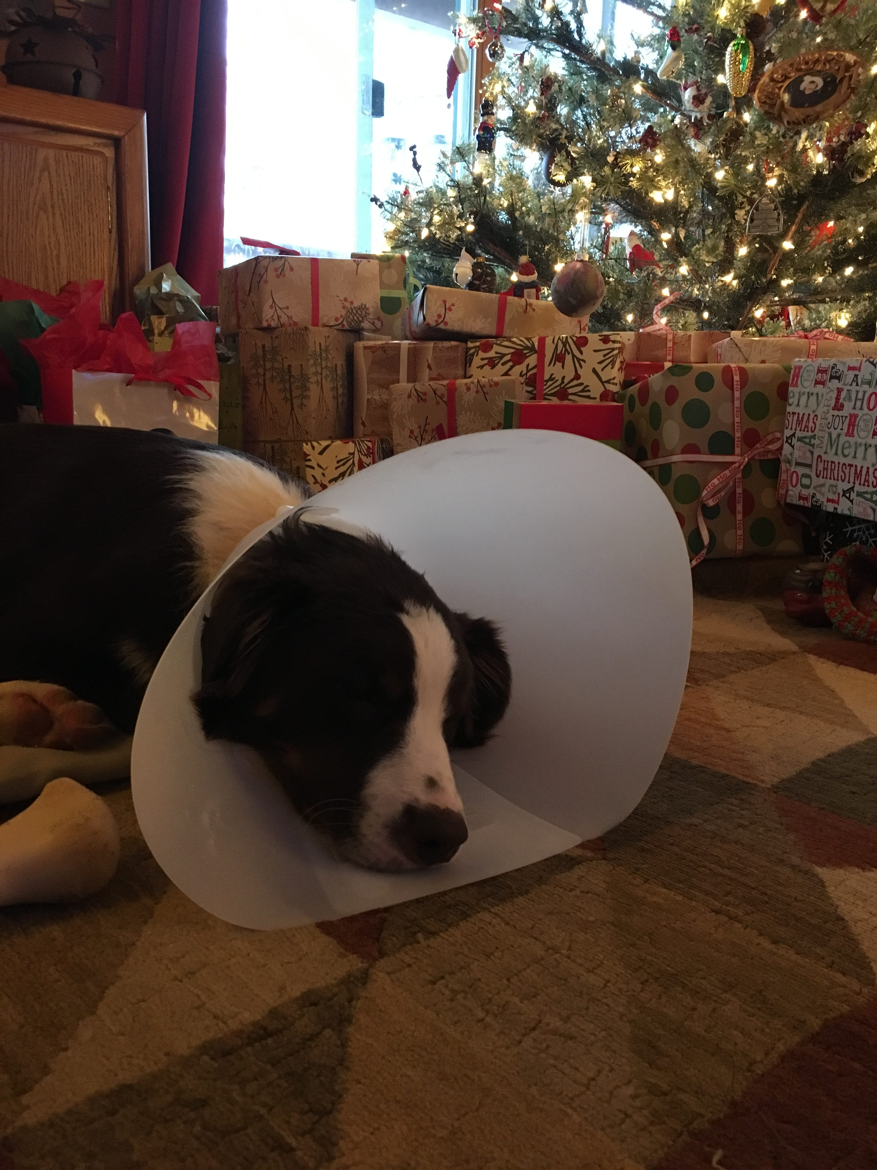 Cone of Shame at Wilderness Bay Lodge and Resort